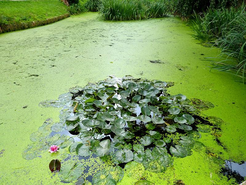 Teich Schlossgraben Freital Burgk
