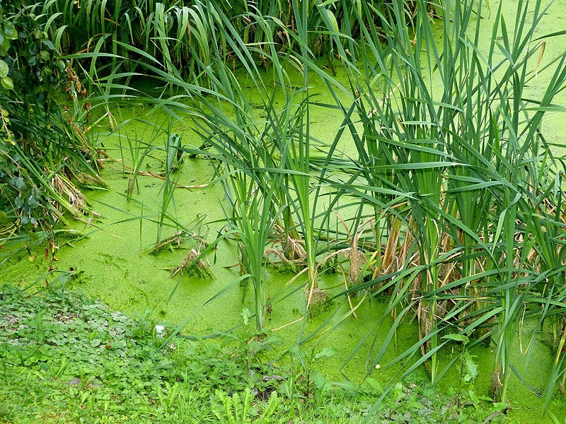 Biotop Freital Schlossgarten