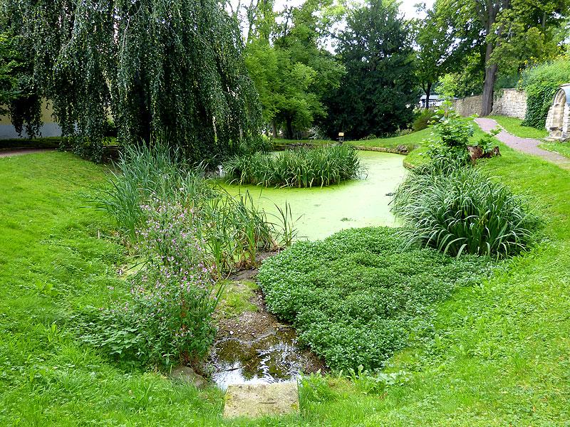 Grüner Teich Freital