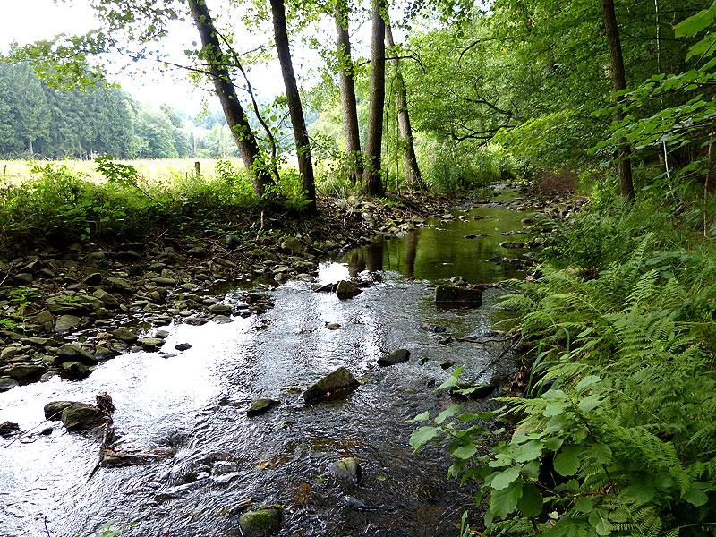 Bilder aus dem Tharandter Wald – Bild 13