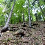 Bilder aus dem Tharandter Wald - Bild 12