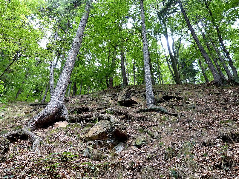 Bilder aus dem Tharandter Wald