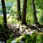 Bilder aus dem Tharandter Wald - Bild 10