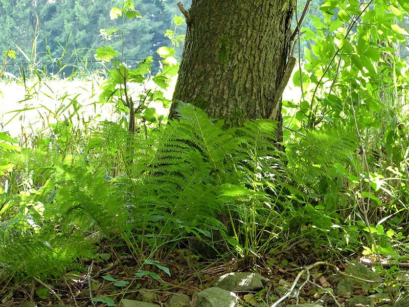 Bilder aus dem Tharandter Wald – Bild 7