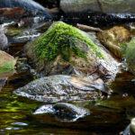 Bilder aus dem Tharandter Wald - Bild 6
