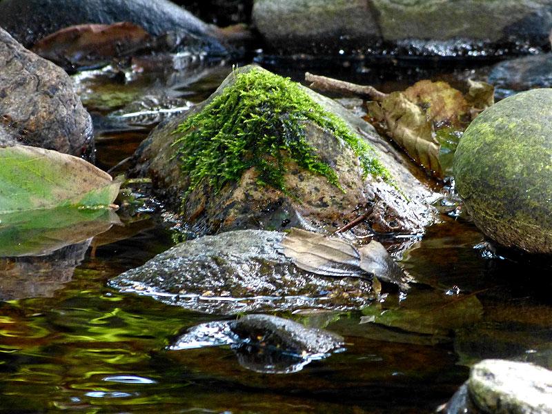 Bilder aus dem Tharandter Wald – Bild 6