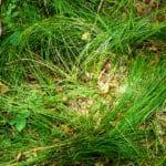 Bilder aus dem Tharandter Wald - Bild 1