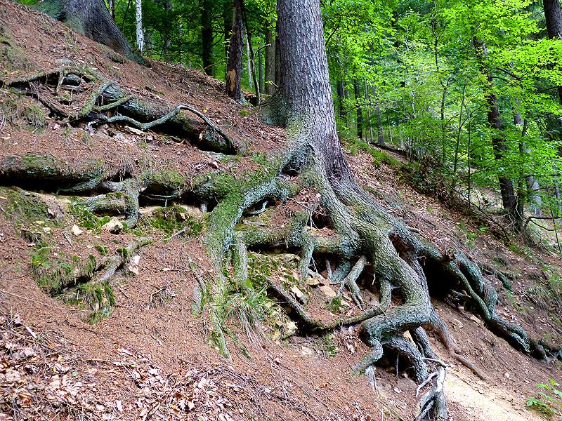 Tharandter Wald beliebtes Ausflugziel