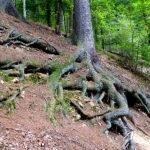 Bilder aus dem Tharandter Wald - Bild 14