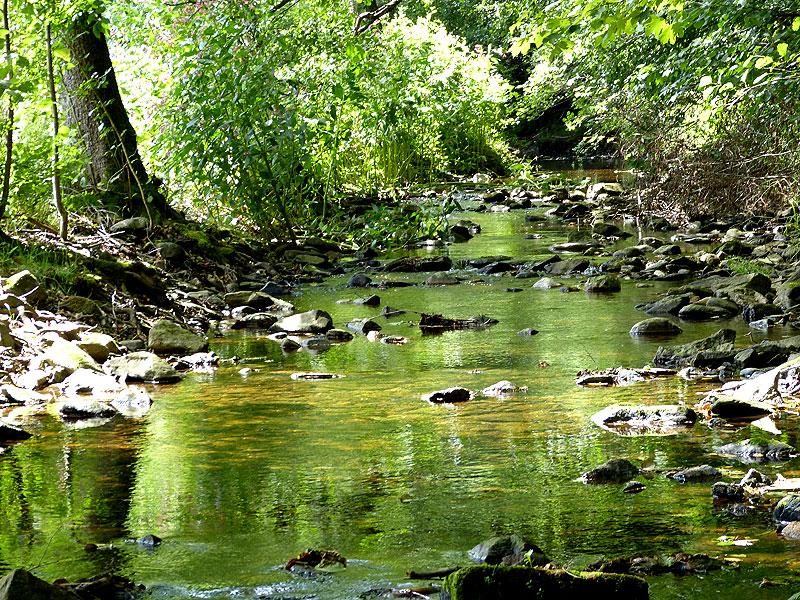 Wunderschöne Natur im Tharandter Wald