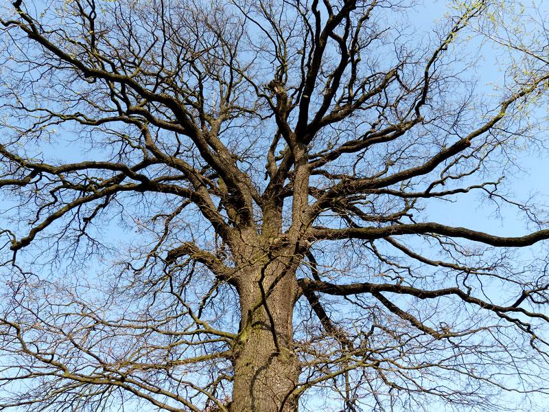 Alte Bäume unter Naturschutz
