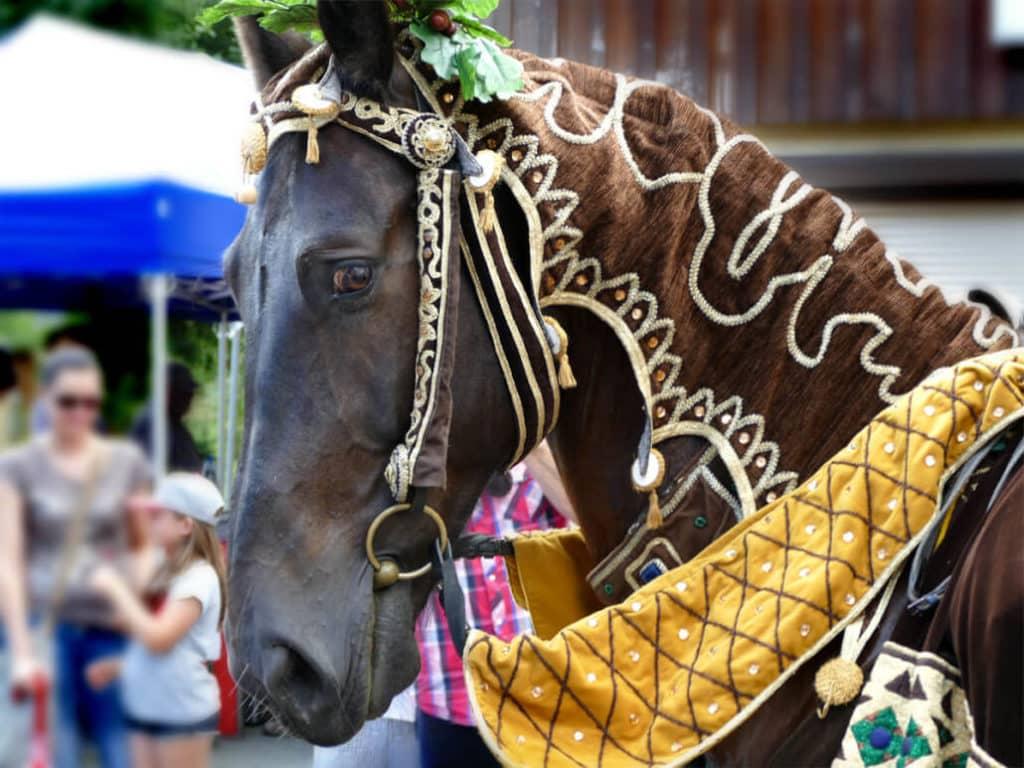 Neugieriges Pferd in Tharandt