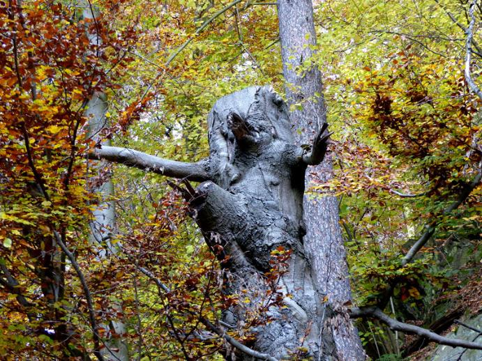 Alter Baum im Rabenauer Grund