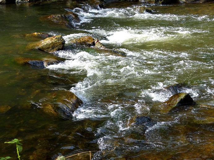 Flussbett der Roten Weißeritz