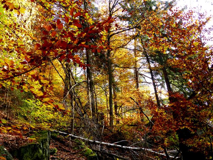 Natürlicher Wald Rabenauer Grund
