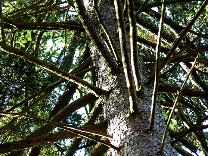 beeindruckender Baum