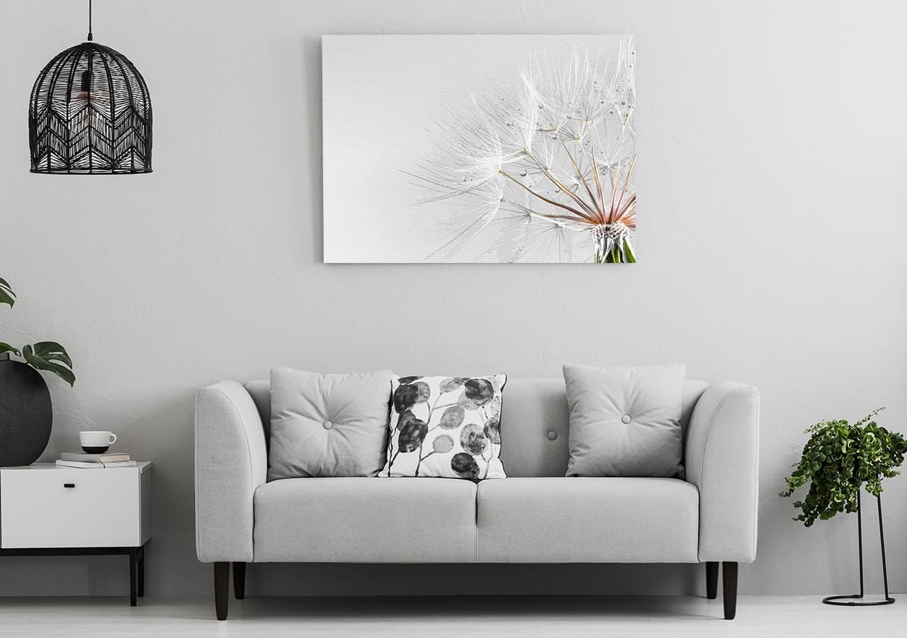Bild Pusteblume aus der Nähe im Wohnzimmer